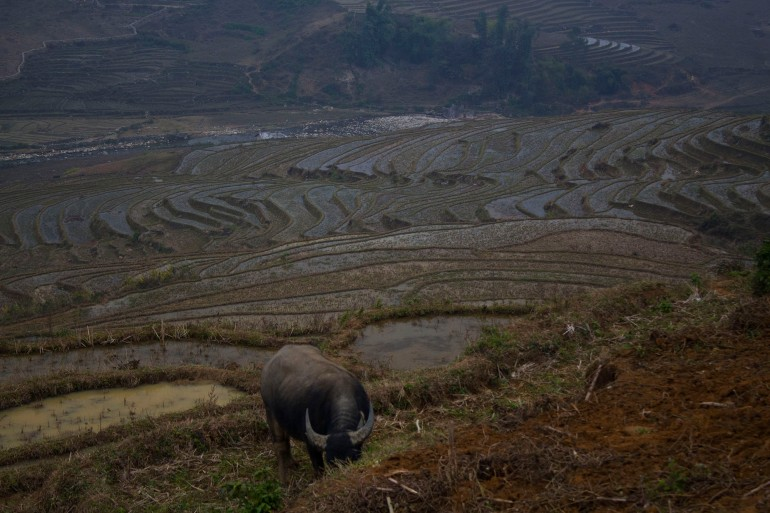 buffalo sapa motorbike in vietnam