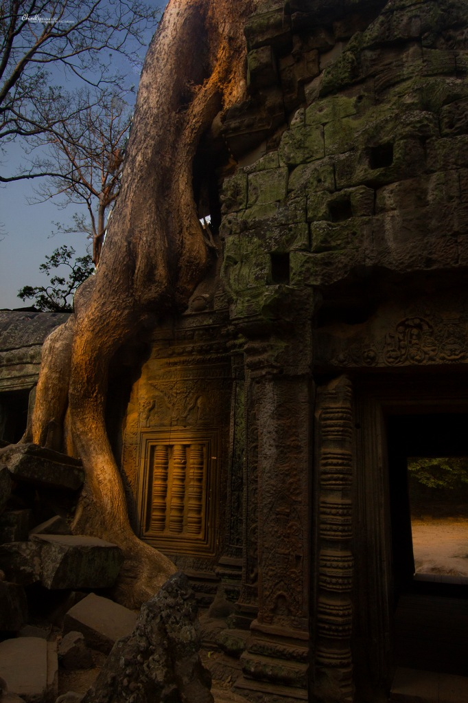 angkor tree overgrown temple